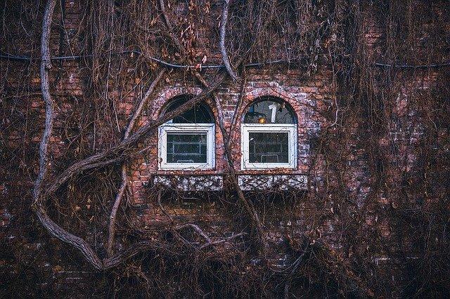 obrostlá okna