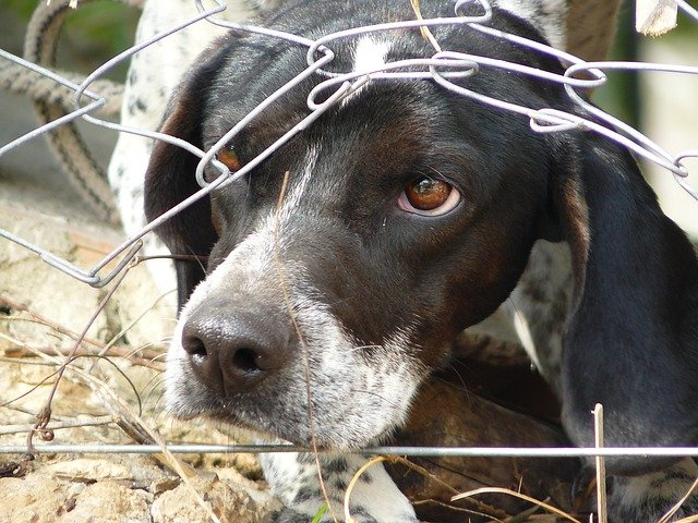 pes pod plotem