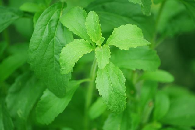 sladká rostlina