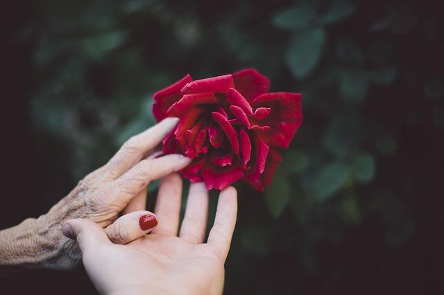 ruce u růže